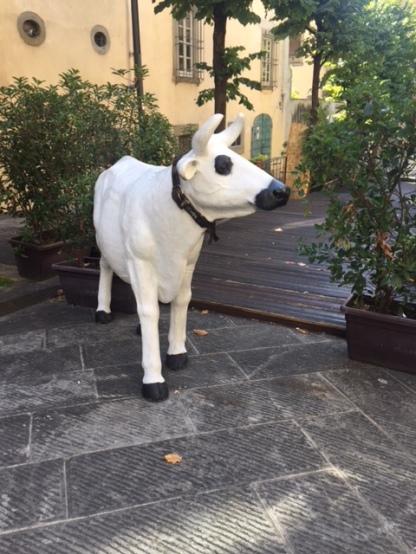 Cow along the walk