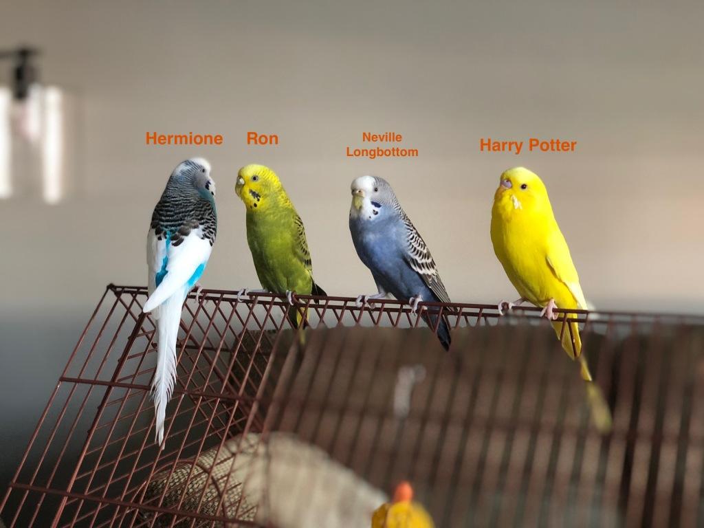 Harry Potter Birds